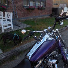 Harley-Davidson FXSTD 1450 -00 H.9450E